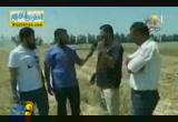 نهضة القمح فى مصر ( 16/5/2013 ) ودن واحدة