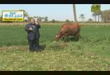 البقرة( 14/7/2013) الحيوان يعظ