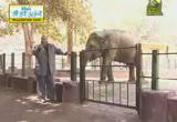 الفيل ( 15/7/2013)الحيوان يعظ