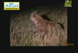 عادات وغرائب5( 15/7/2013) أحلى فطار 2