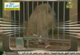 الأسد ( 18/7/2013) الحيوان يعظ