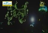 السحر والدجل والسحرة والمشعوذيين( 1/8/2013) نور الوحيين