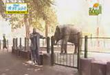 الفيل ( 8/8/2013)الحيوان يعظ