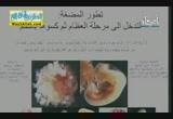 ايات الرحمن فى خلق الرحمن ( المضغة والعظام  ) - ( 26/10/2013 ) شواهد الحق