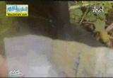 الكنز المسحور ( 4/12/2013 ) عفاريت اخر الزمان