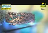 قضية النظر ( 25/6/2014 ) تمارين العزيمة والهمة