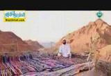 رحلتنا الى الجنه ( 2/7/2014 ) سحر الجنه