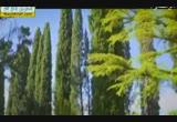 بشارةالكتبالسماويةالسابقةبالنبيصلىاللهعليهوسلم(2)(1/7/2014)دلائلالنبوة
